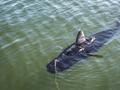 ABD Deniz Kuvvetleri köpekbalığı şeklinde insansız deniz araçları geliştiriyor