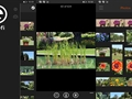Eyefi Mobi, Windows Phone için de yayınlandı