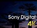 4K ve HDR sinema teknolojileri ile ülkemizdeki son durumu konuştuk