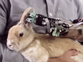 Araştırmacılar hissedebilen biyonik kol geliştirmeyi başardı