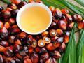Palm yağı dosyası: Neden zararlı? Türkiye'de durum ne?